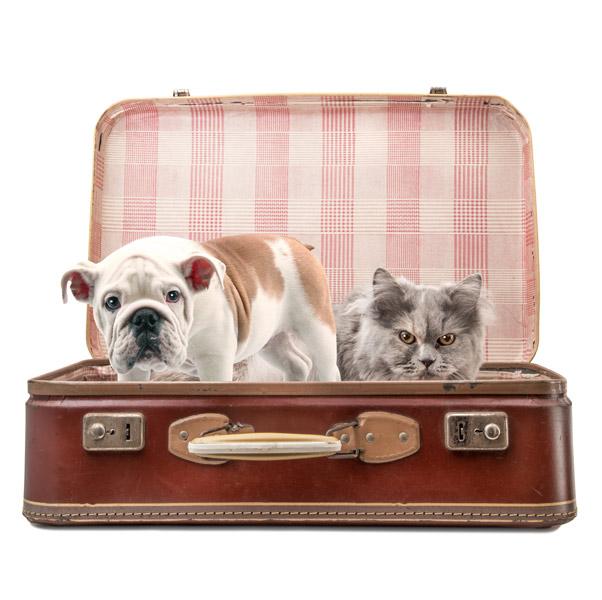 Animali in viaggio - fonte google