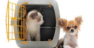 cane gatto - fonte google