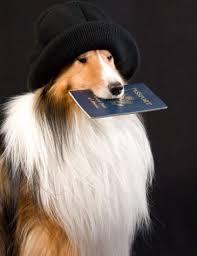 Cane con Passaporto
