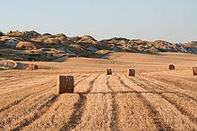 Toscana - Il suggestivo paesaggio delle Crete Senesi (deserto di Accona)