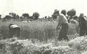La Trebbiatura del grano