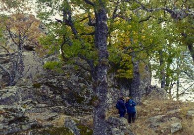Monte Croccia - Massi erratici
