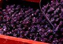 olive infornate di Ferrandina