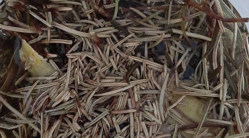 liquore al rosmarino - rosmarino a macerare